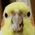 View Speedblox's Profile