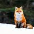 View FoxyThe11's Profile