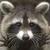 View LittleRoofie's Profile