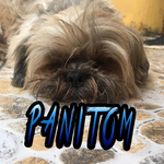 View stats for Panitom16