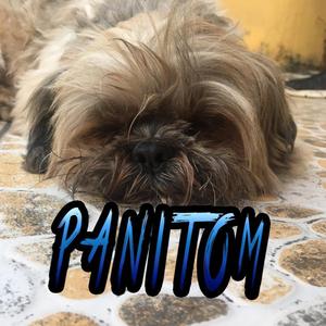 Panitom16 Logo