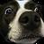 avatar for smartguy