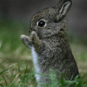 bunnyhoppor Logo