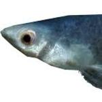 View elder_fish's Profile