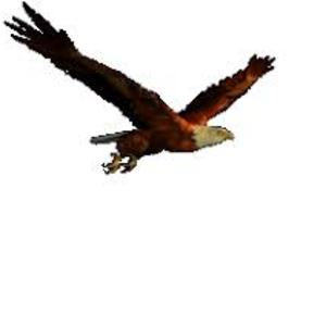 metal_eagle