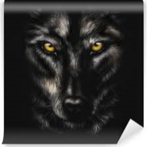 Illustration du profil de nyroxwolf