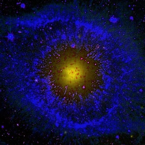 View The_Paradox_of_Stars's Profile