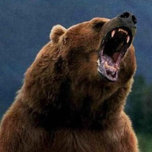 beartyler