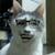 View 艾斯比肥猫's Profile