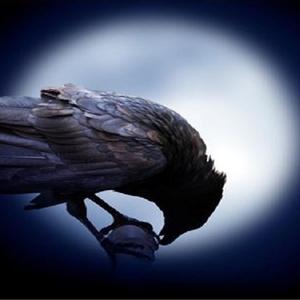 View ravenrayne's Profile