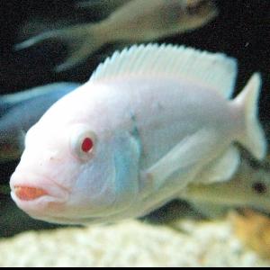 View stats for AlbeanoFish