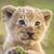 View lion7177's Profile