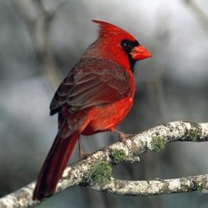 CardinalHS