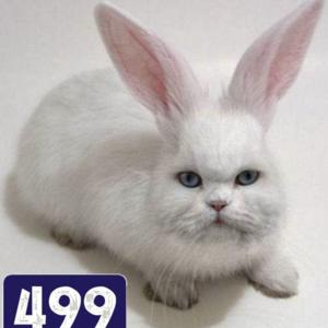 View CatRabbit499's Profile