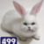View CatRabbit499's Profile