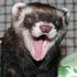 crazy_ferret_lady