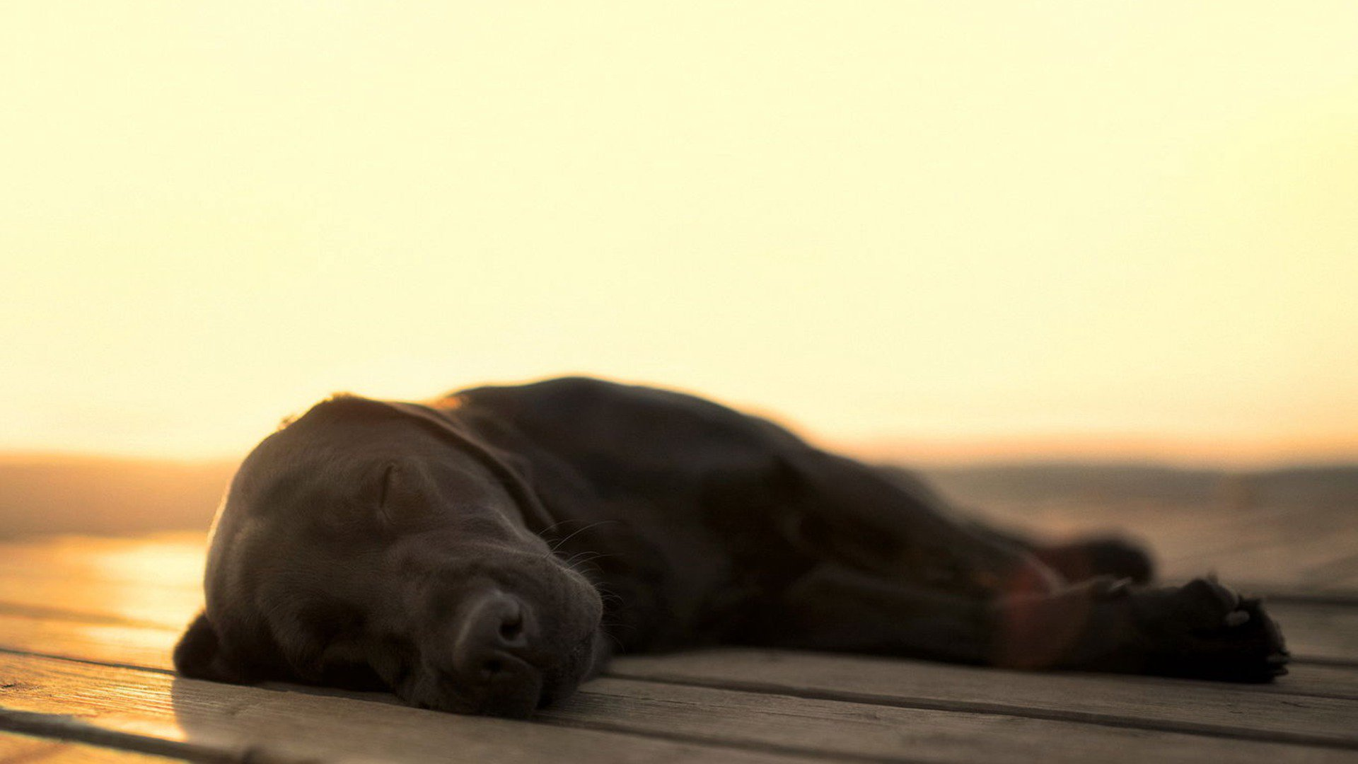 heartofdog