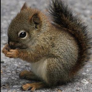 View SniperSquirrel0's Profile