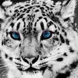 Dantesgrin profile image e17d1b32e3b25a51 300x300