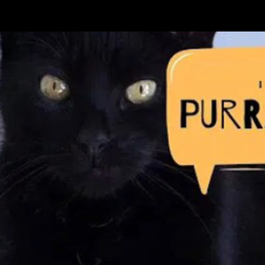 Purranoid Logo