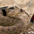 View Punlshed_Snake's Profile