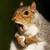 View SquirrelSteak's Profile