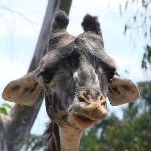 View DepressedGiraffe's Profile