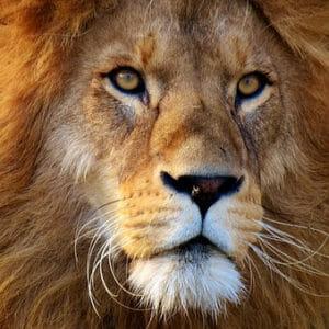 aslan_b44