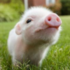 View Electric_Bacon's Profile