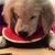 View hanksdog's Profile