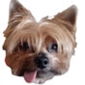 pissickickojoga Logo