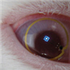 View The_MineCrak's Profile