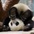 View PandaBearJelly's Profile