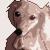 avatar for tsukumo