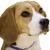 View beaglebutt69's Profile