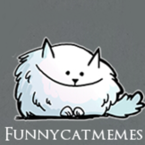 funnycatmemes - Twitch