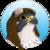Gyrfalco-profile_image-33fd25c4f553eb5e-50x50