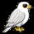Gyrfalco-profile_image-c1fcc4ca9c6d938f-50x50
