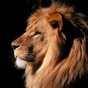 King_Leon_