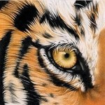 View stats for kttiger666