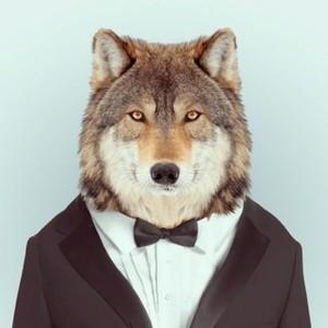 Lilwolfielive