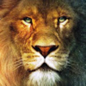 View LionZXY's Profile