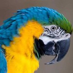 View stats for Macaw45