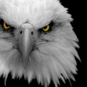 Metagrosseagle profile image 791fb7a156e22bb5 300x300