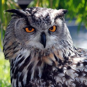 View Owlaf's Profile