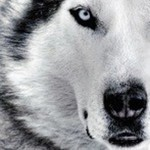 View platewolf's Profile