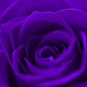 View PurpleRose26's Profile