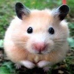 View stats for StickyHamster