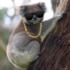 The_Balla_Koala's avatar