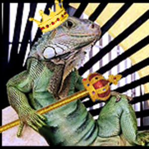 View the_iguana_man's Profile